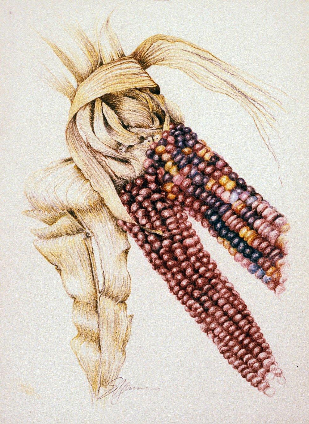 indian corn ed.jpg