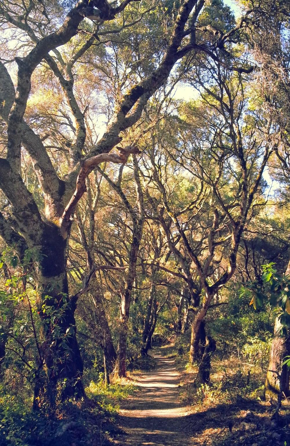 treeland.jpg