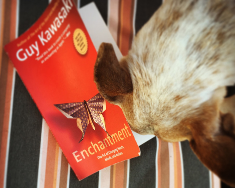 Nosey Rosie, wanting to know what I'm reading... effectively enchanting me while I read  Enchantment!