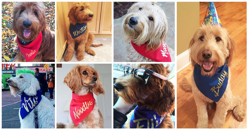 Custom name bibs shared with Bacon Bibs on Instagram. Top Row, left to right: @ teddy.goldendoodle ,@ winston_thedood ,  @mochi_doodle .  Bottom Row  , left to right:   @vitothedogfather ,   @cookie_noodles , @  elliedoodledog . Far right: @  goldendoodlebuddy .