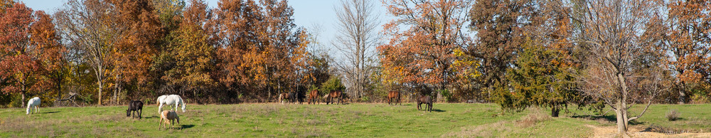 HorseShoot_0169_DSC06199-X3.jpg