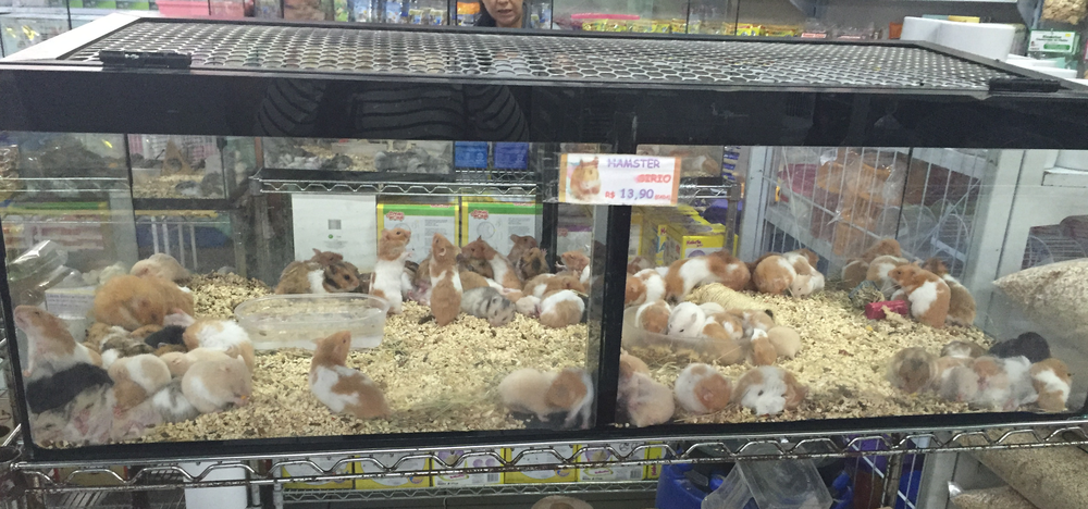 Syrian Hamsters Tank in Aquario Itaquera's Pet Shop in Sao Paulo, Brazil | Photograph by Talita Bateman