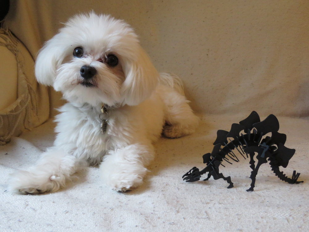 Casper and the stegosaurus | Credit: Talita Bateman