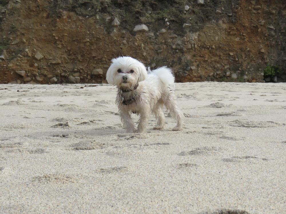 Casper enjoying the beach | Credit: Talita Bateman