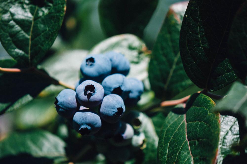 REPORTAJES | El Malaín - Frutos Silvestres