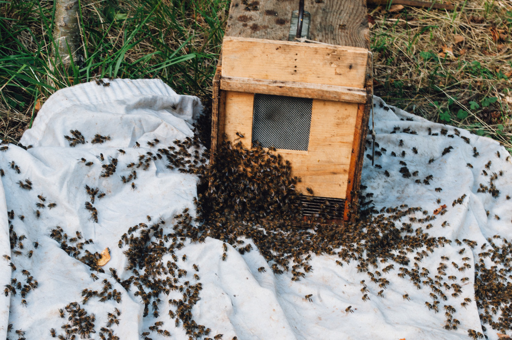 harvest_a_beehive_monicargoya-6.jpg