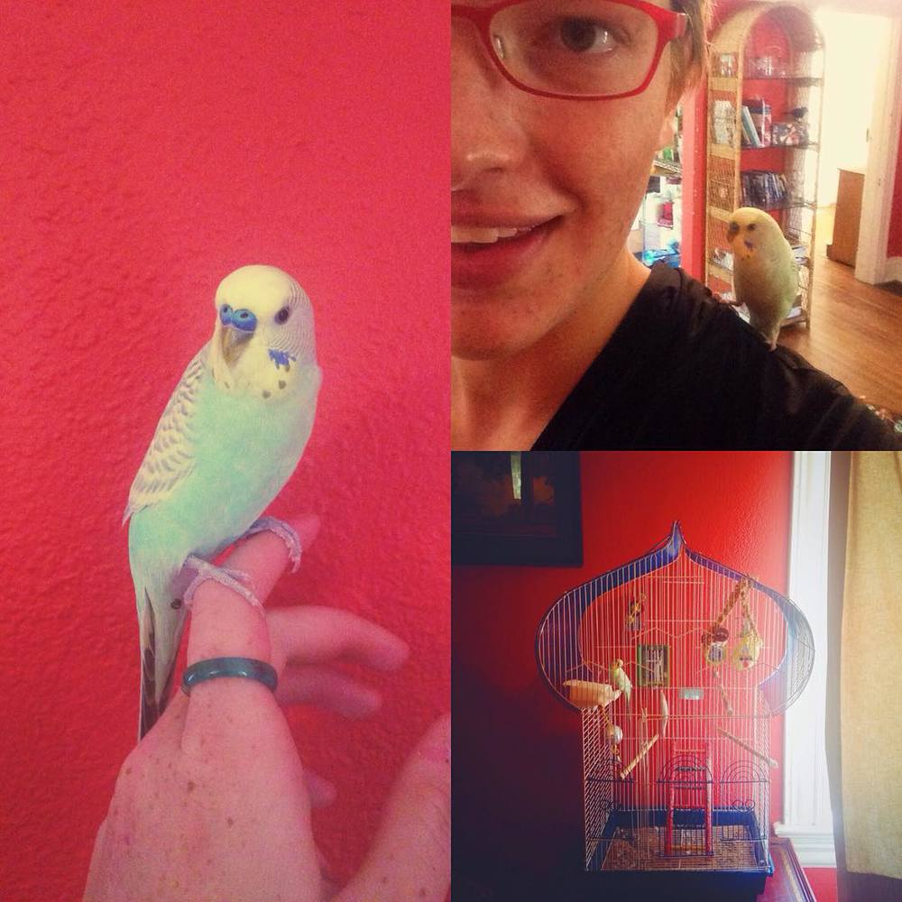 This is my new prettyboy roommie, Ethel. We're hitting it off already. #EthelBird