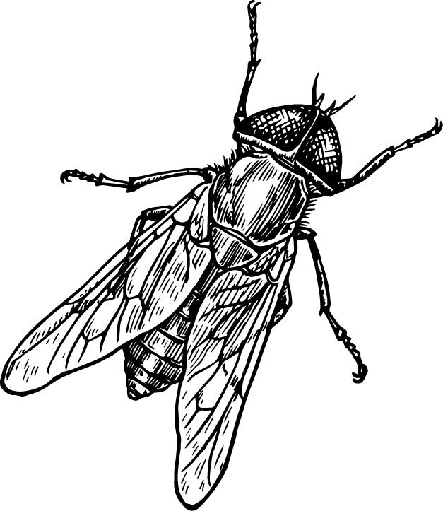 fly- logo.jpg