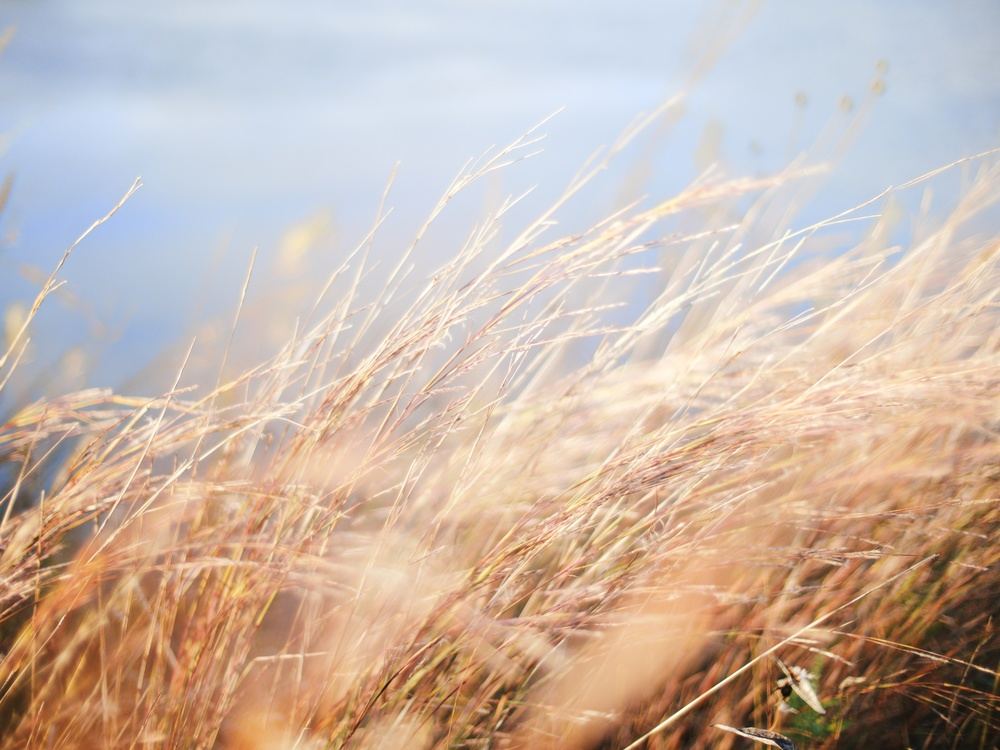 barleyandbluesky.jpeg