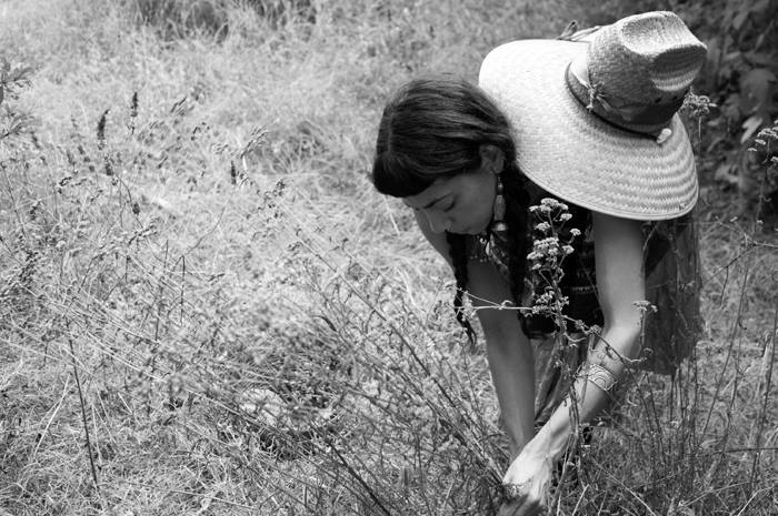 Carla Vargas-Frank, gathering Yarrow stocks and seed in Austin, Texas.