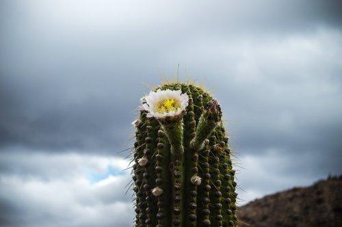 Dreaming in the Desert — yerba nomadica