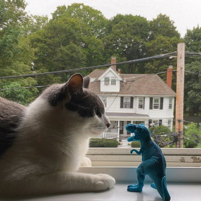 The cat and the Dino #cat #chat #catsofinstagram #catlovers #cats_of_instagram #catlover #catgram #dinosaur #dinosaurs #dino #window #conversation #confrontation