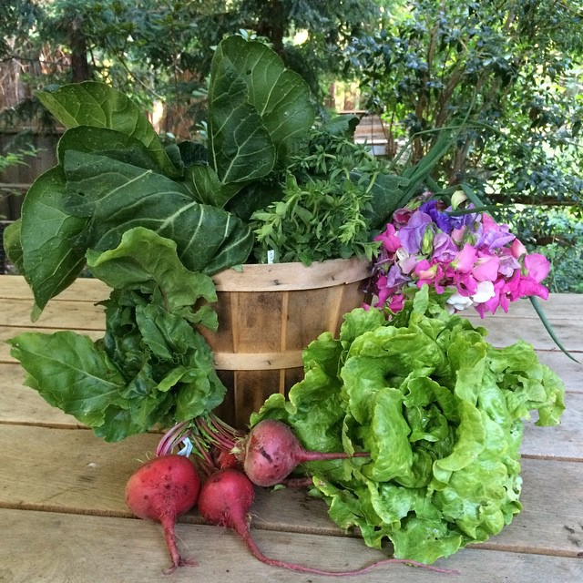 I love my CSA basket! Gorgeous, fresh and delicious veggies eaten best in simple recipes.