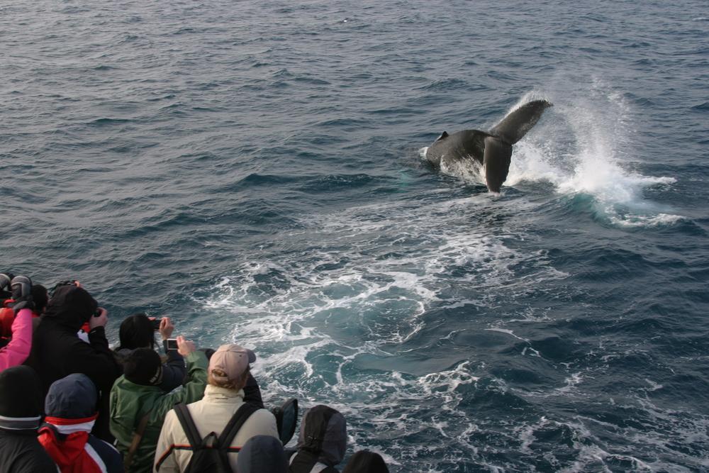 2010-03-14 Humpback Whale 00.JPG