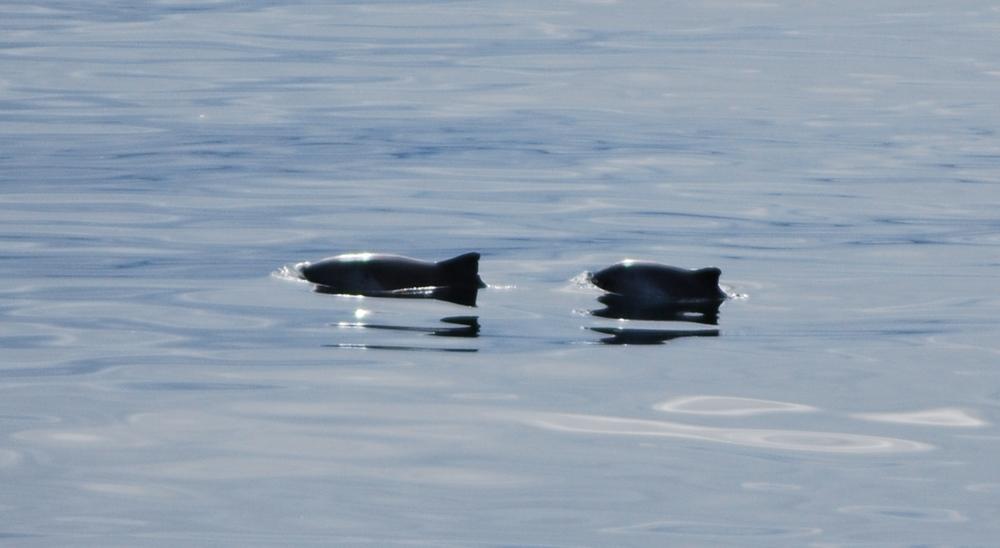 1_2 Harbour porpoises_LR.jpg