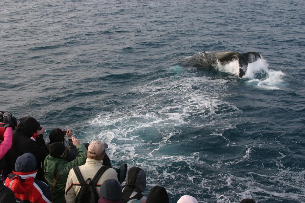 2010-03-14 Humpback Whale 01.jpg