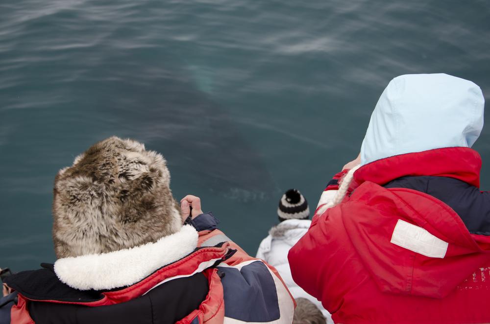 2012-03-17 Humpback Whale 03.jpg