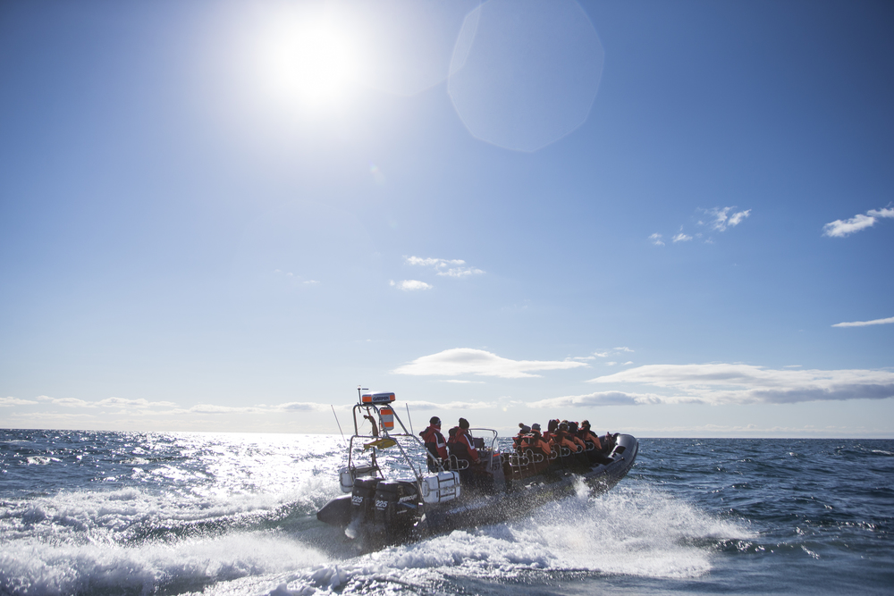 Reykjavik sightseeing tour in a 12 seater RIB fast boat.