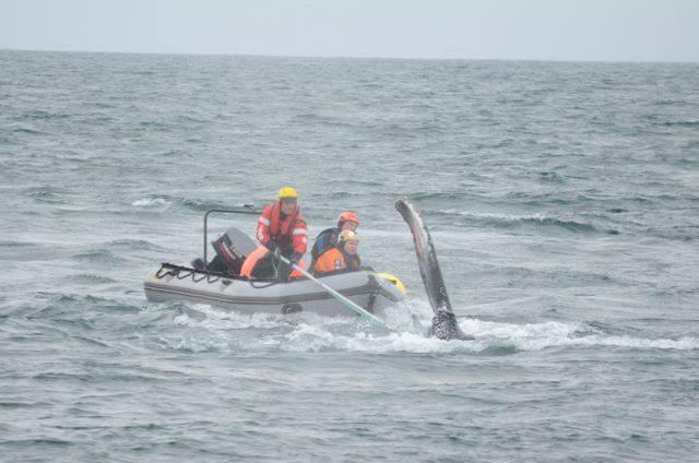 Photo credit:Guðlaugur Ottesen Karlsson - Icewhale