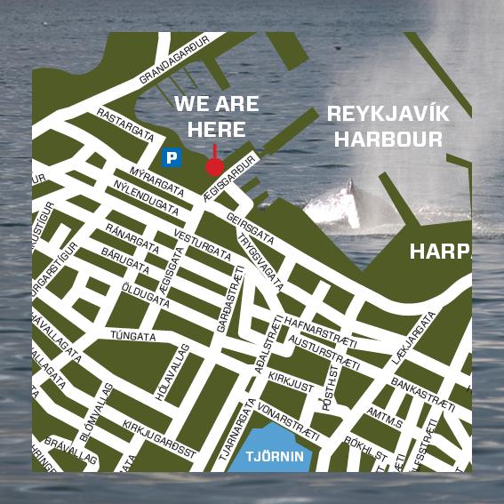 WhalesafariReykjaviklocation