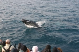 9 Breaching Humpback AND passengers_LR.jpg
