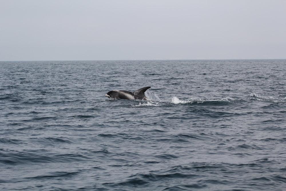 Dolphins_JR_IMG_7352.JPG