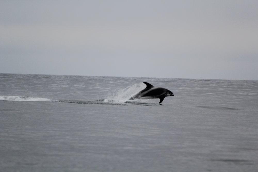 dolphins_JR_IMG_7644.JPG