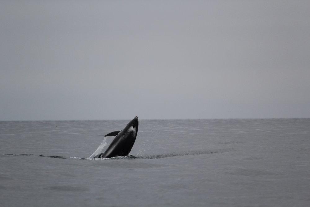 dolphins_JR_IMG_7733.JPG