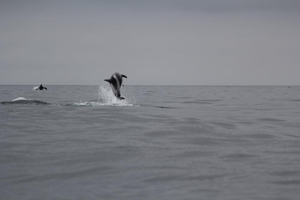 dolphins_JR_IMG_7741.JPG