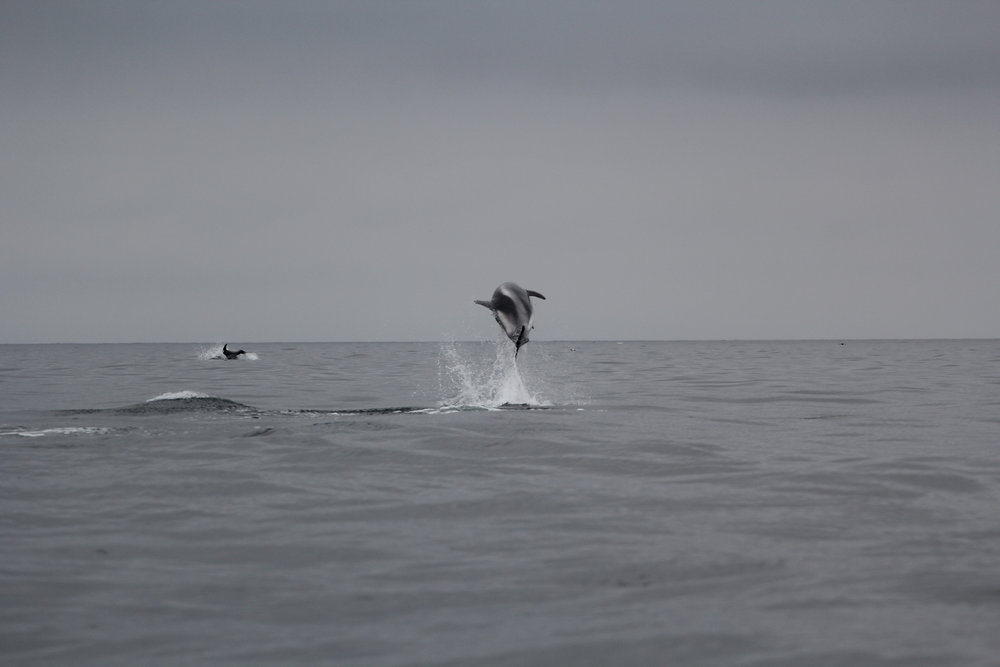 dolphins_JR_IMG_7742.JPG