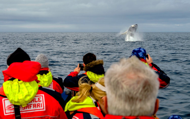 A humpback boasting it best moves for one of our tours!