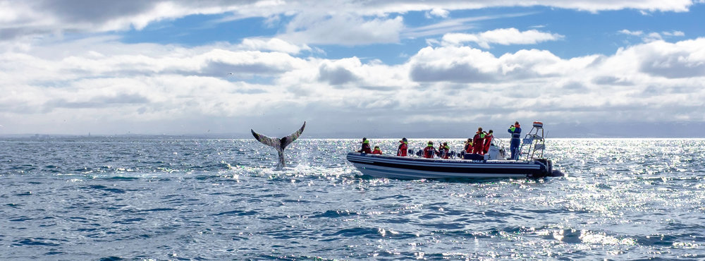 Small Group Experience: Only 12 person per boat with an expert whale guide and captain