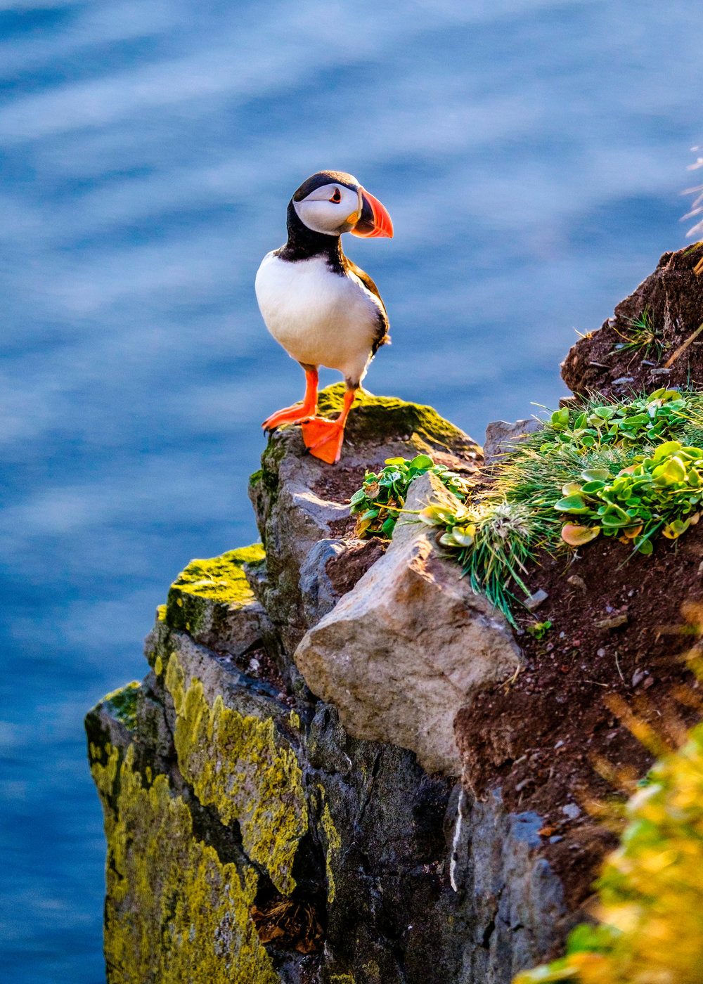 puffin_on_a_rock.jpg