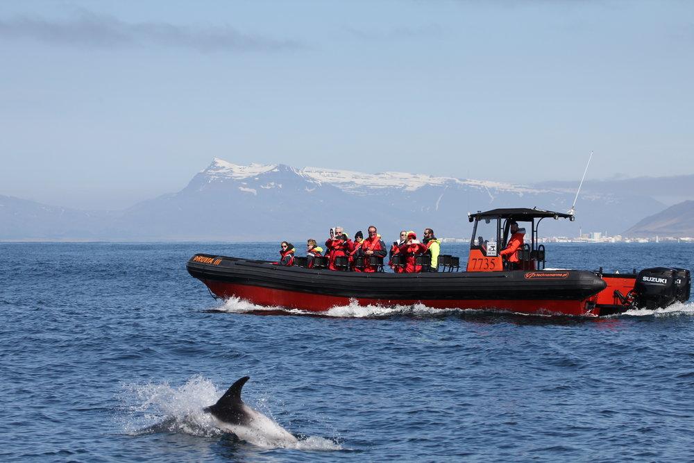 Whale Safari, closer to Nature,,,