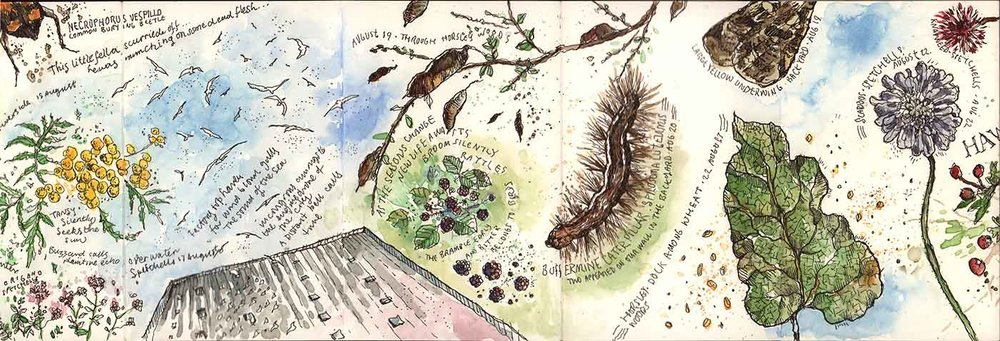 moleskine-nature-09.jpg