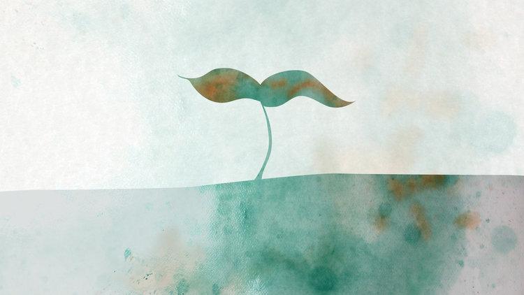 seedling2.jpg