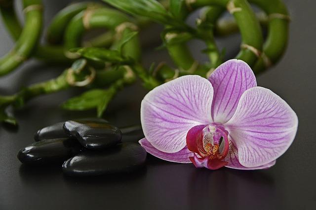 flower-1884161_640.jpg