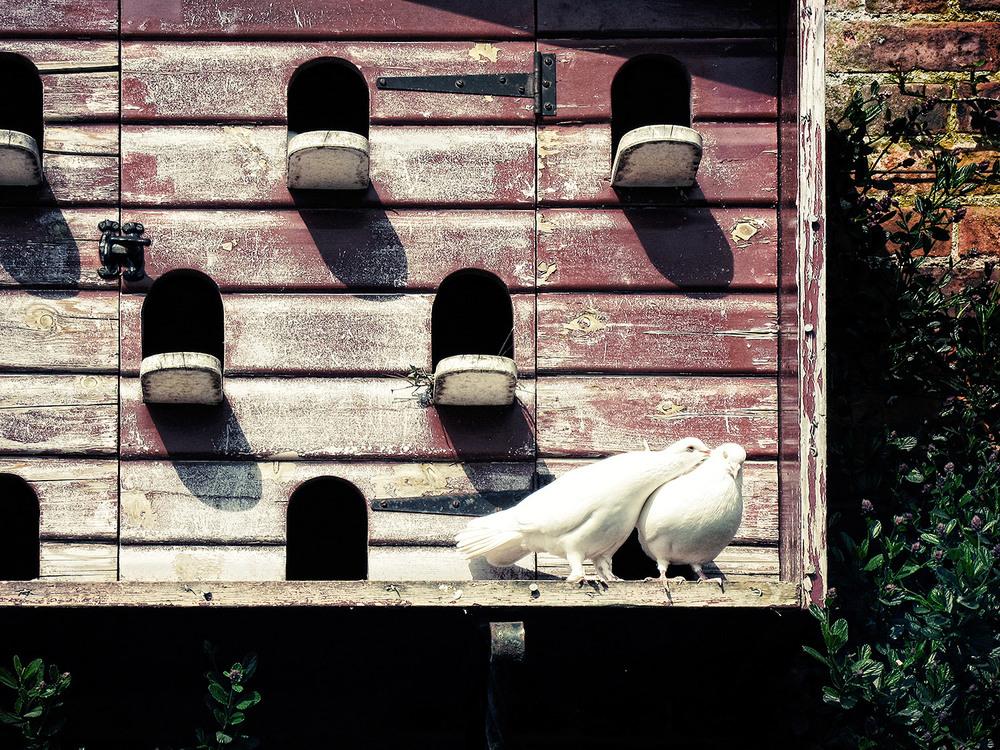 Doves-15.jpg