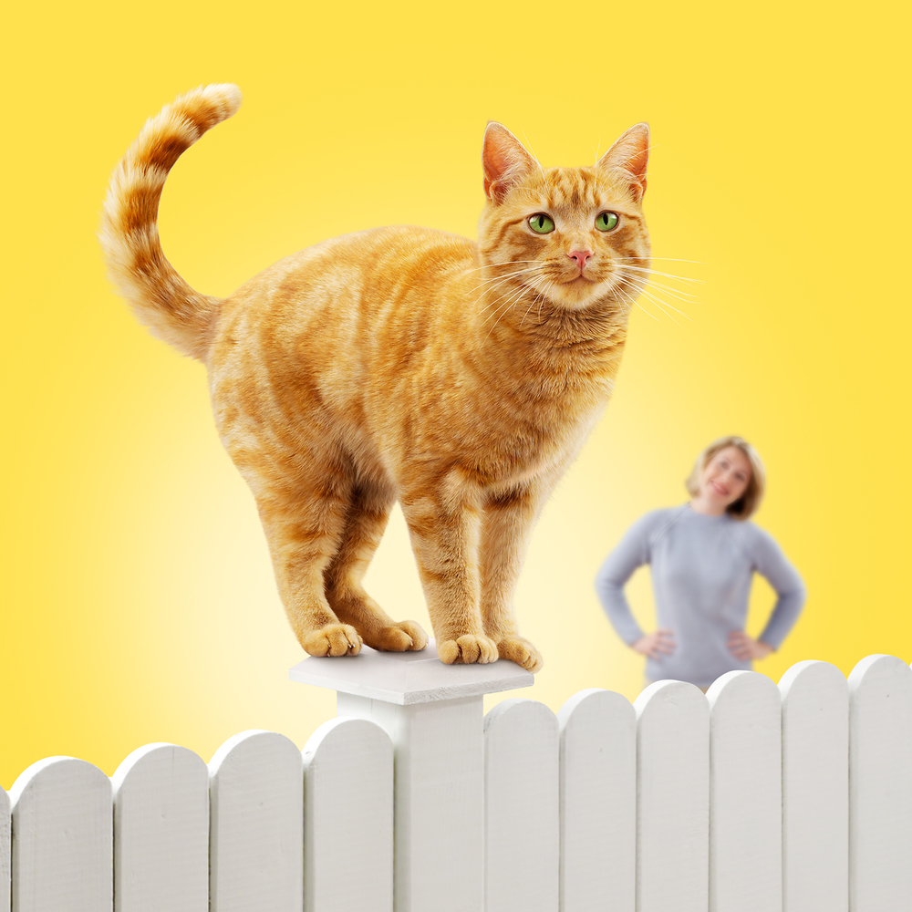 Friskies-Light-Fence.jpg