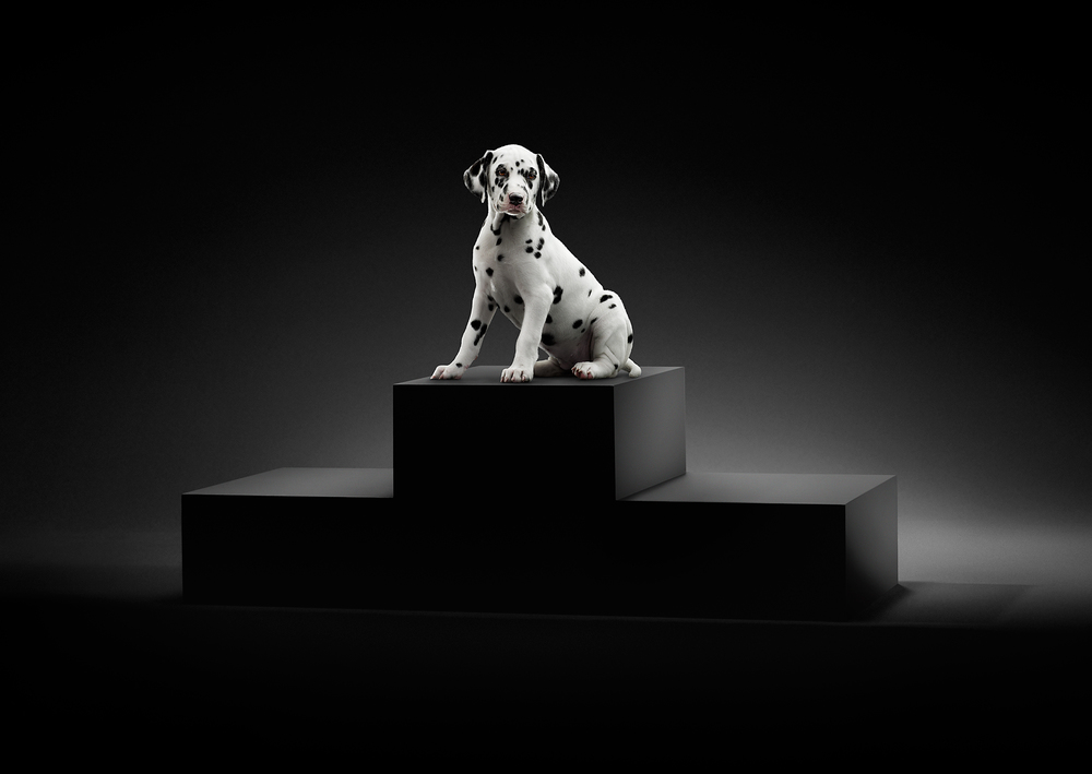 PP-Puppy-Podium-Ad-v2.jpg