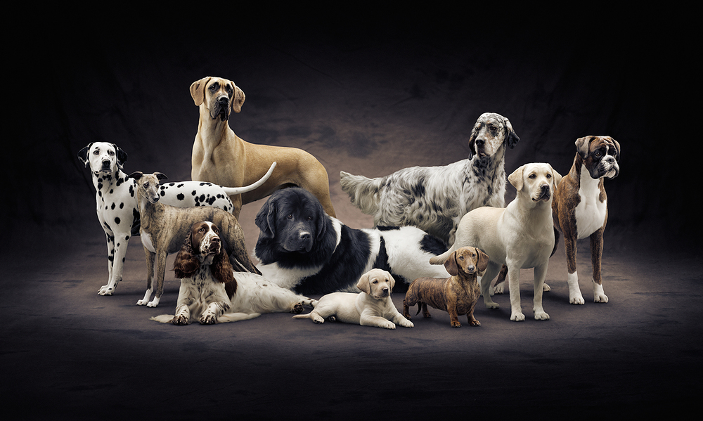 Purina BOD Dogs 15.jpg
