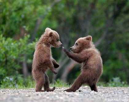 karate-bears3.jpg