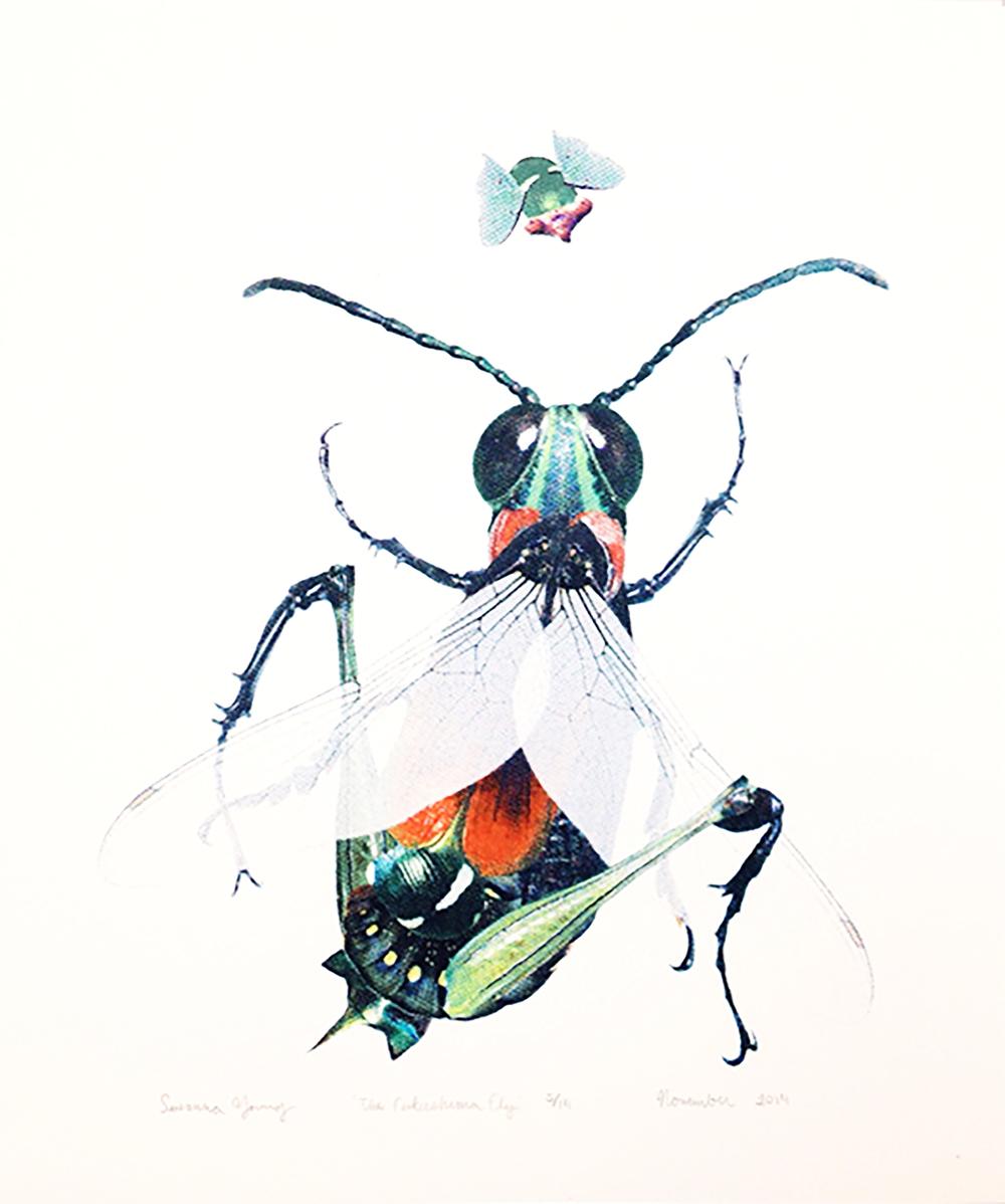 fukushima fly.jpg