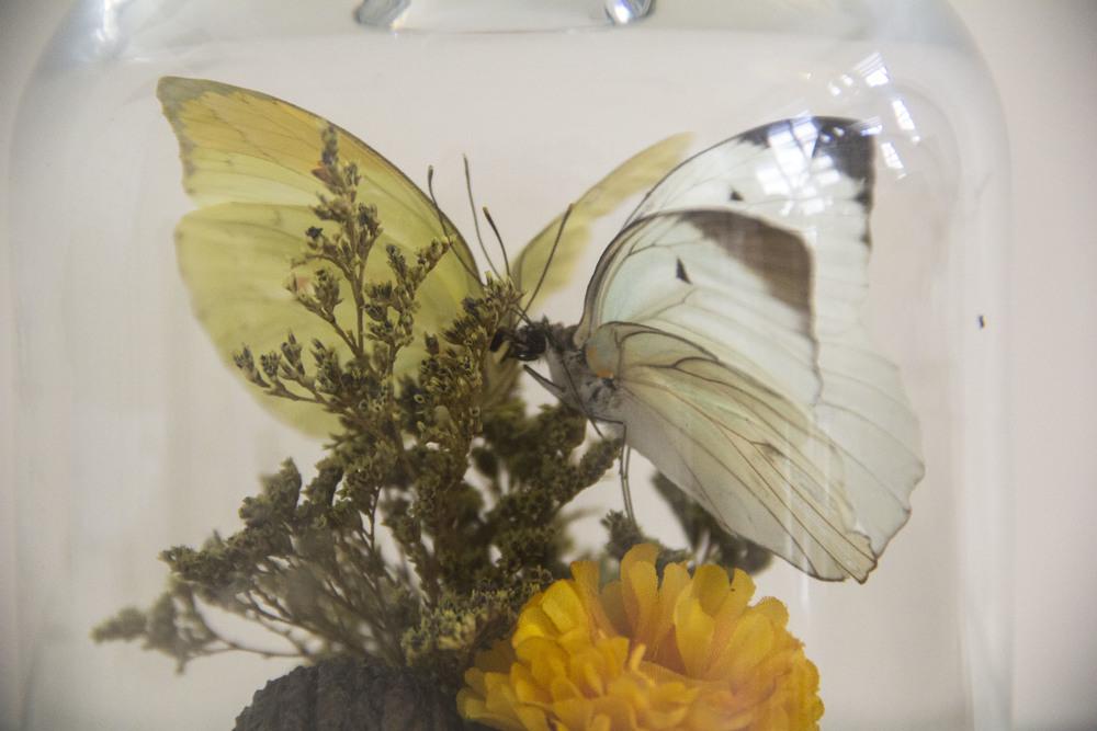 2butterfliesdetail.JPG