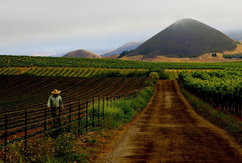 Edna Valley, San Luis Obispo