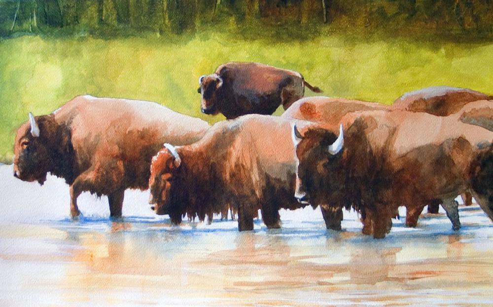 Wolf River Herd