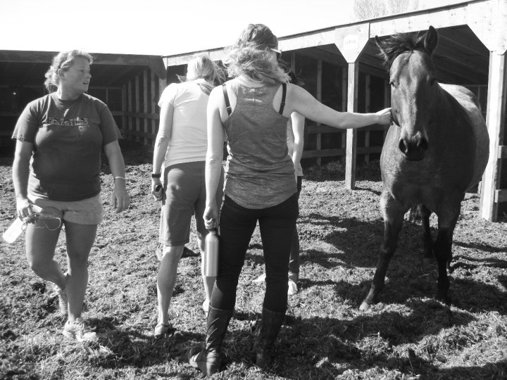 Here I am, awkwardly petting a horse who looks just as uncomfortable about it as I am.