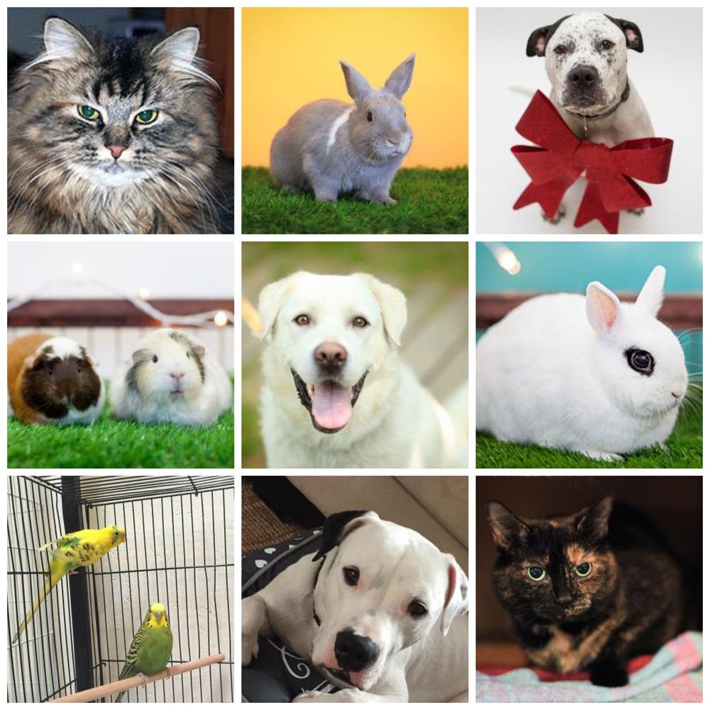 Photos from Toronto Humane Society website.