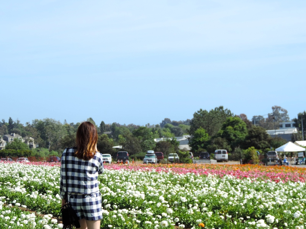 carlsbad flowerfield back view .JPG