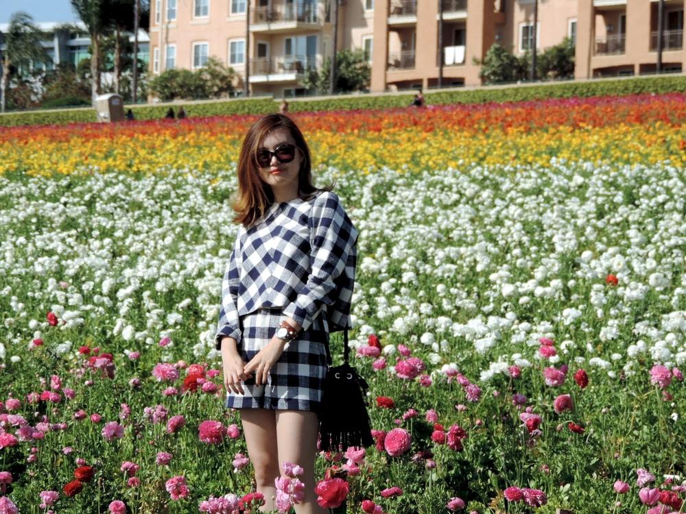 flower field carlsbad blossom.JPG